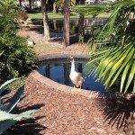 Mothers Day_Duck_Lake Eola_Orlando-misc 1023
