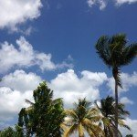Mothers Day_Tropical Tree Sky-misc 609